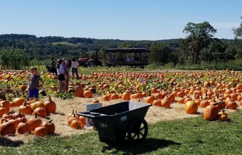 Pumpkin patch at Jones Family Farm
